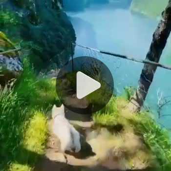 فیلم پروفایل طبیعت گردی سگ سفید