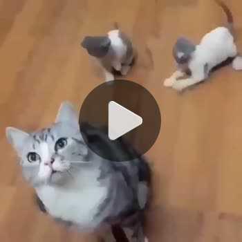 فیلم پروفایل گربه های بازیگوش شیطون
