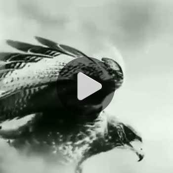 فیلم پروفایل عقاب هنری سیاه سفید